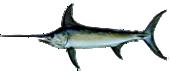 Miami Swordfish Fishing
